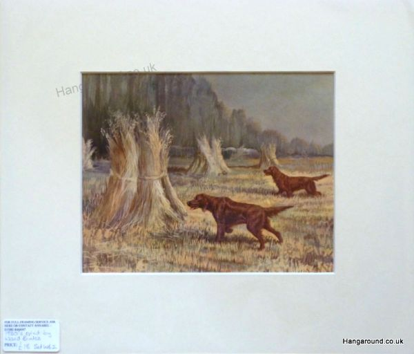 Irish Setters  1950's print by Ward Binks - Set WB2